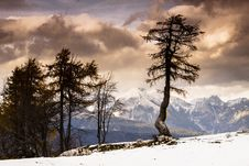 Single Tree And Julian Alps Royalty Free Stock Images