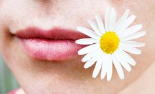 Chamomile And Her Lips Royalty Free Stock Images