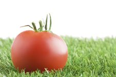Free Tomato On Grass Royalty Free Stock Image - 25817576