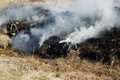 Free Burned Grass Residues Stock Image - 25822601
