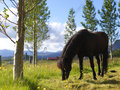Free Single Black Horse On A Farm Stock Images - 25824624