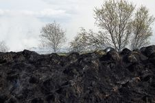 Free Burned Grass Residues Royalty Free Stock Photo - 25822595