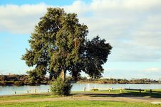 Free Large Evergreen Tree By The Estuary Stock Photos - 25823863