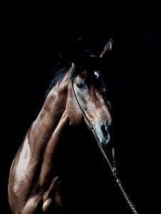 Free Portrait Of Amazing Breed Stallion In Dark Stock Photos - 25824223