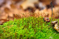 Free Macro Of Moss Stock Photos - 25839113