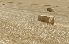 Free Collecting The Harvest Stock Images - 25832974