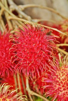 Free Red Ripe Spiky Fruit Royalty Free Stock Image - 25834266