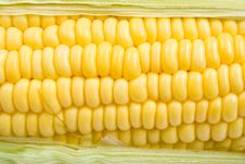 Free Corn Stock Photography - 25834762