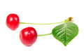 Free Two Red Cherries Isolated On White Background Royalty Free Stock Photos - 25841858