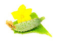 Free Little Green Cucumber With Leaf And Flower Royalty Free Stock Photos - 25841918