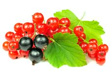 Red And Black Currants With Green Leaves Royalty Free Stock Photo