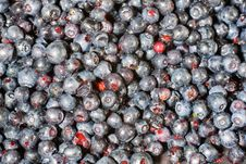 Free Blueberries Stock Photo - 25844960