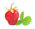Free Strawberry With Green Leaf Royalty Free Stock Images - 25856509