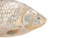 Free Frozen Crucian Carp Fish Stock Images - 25856534