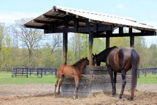Mom And Baby Horse,eating At The Farm Stock Photography