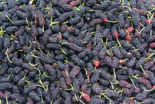 Free Mulberry Fruits Stock Image - 25869311