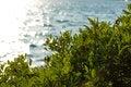 Free Green Vegetation In Sunset Royalty Free Stock Photos - 25875008