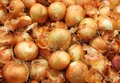 Free Harvest Onions Royalty Free Stock Photography - 25879087