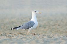 Free Sea Bird Stock Photography - 25871732