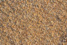 Free Sea Shell Rock Stock Photos - 25871933