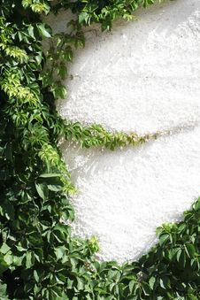 Climbing Plant Natural Frame Royalty Free Stock Images