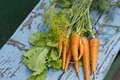 Free Fresh Carrots, Lettuce And Fennel Royalty Free Stock Photos - 25885718