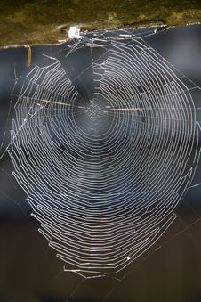 Free Spider Web Royalty Free Stock Photo - 25884705