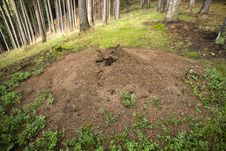 Free Anthill Stock Image - 25885381
