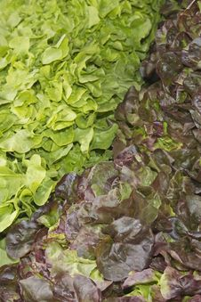 Free Various Kinds Of Salad At A Market Stock Photos - 25887823