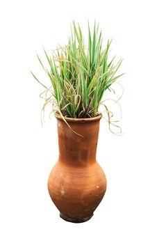 Decorative Jug With A Grass Stock Photography