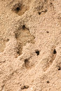 Free Sandy Anthill With Holes Royalty Free Stock Image - 25899556