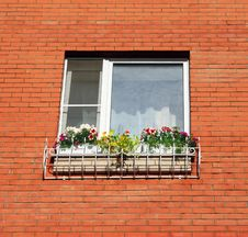 Free Flower Window Stock Image - 25890031
