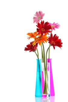 Free Colorful Gerbers Flowers Royalty Free Stock Photography - 25891857