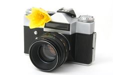 Free Old Film Camera On White With Yellow Narcissus Stock Photography - 25892102