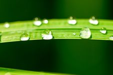 Free Drops Of Rain Stock Images - 25892854