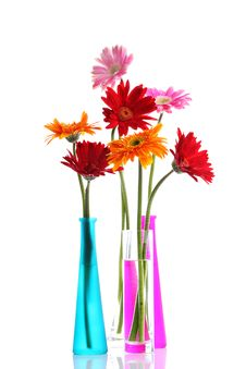 Free Colorful Gerbers Flowers Royalty Free Stock Photography - 25893107