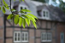 Free Tudor House Through Cherry Tree Leaves. Stock Image - 25893391