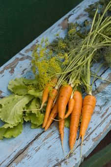 Free Fresh Carrots, Lettuce And Fennel Royalty Free Stock Images - 25898509