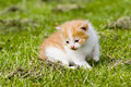 Free Kitten Royalty Free Stock Images - 2593849