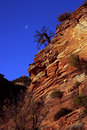 Free Lone Tree With Moon On Cliff Stock Photography - 2596232