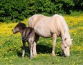 Free Horses - Mother And Foal Stock Photography - 2598742