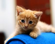 Free Cute Kitten Royalty Free Stock Photo - 2590145