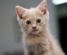 Free Cute Kitten Royalty Free Stock Photos - 2590158