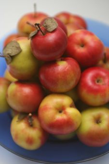 Free Apples In A Plate Stock Image - 2590251