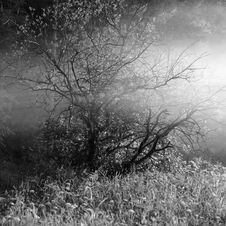 Free Fog Tree Stock Images - 2590714
