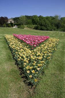 Free Flowerbed Of Tulips Stock Photo - 2591990