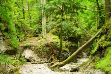 Free Sucha Bela, Canyon In Slovakia Stock Photos - 2592073