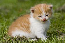 Free Kitten Royalty Free Stock Image - 2593826