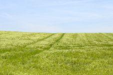Free Green Field Stock Image - 2594201