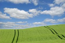 Green Field And Clouds Royalty Free Stock Image